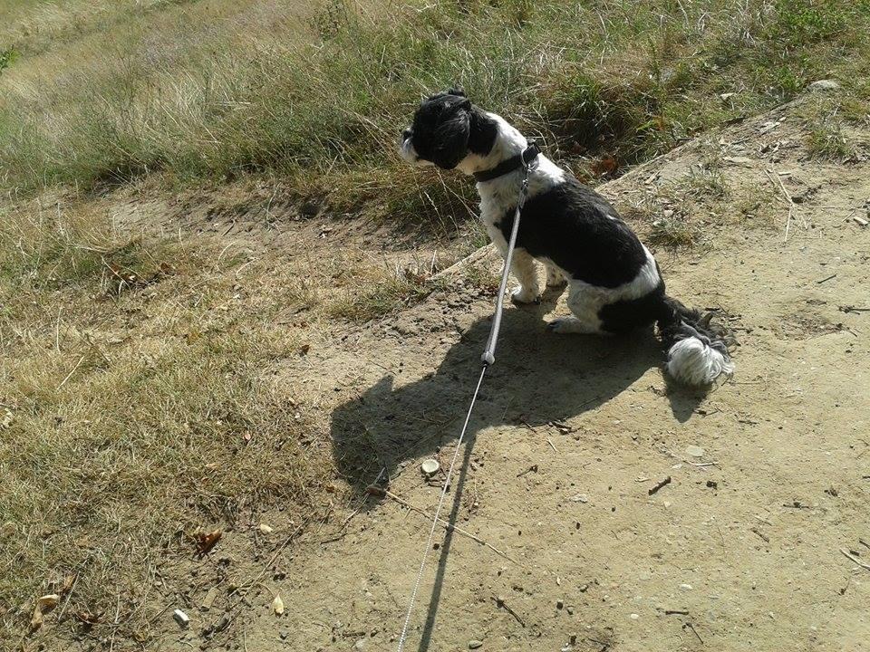 Ostsee Hund
